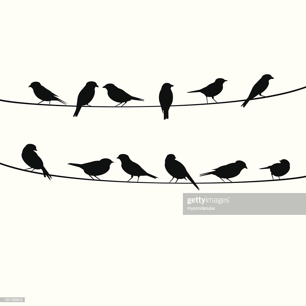 birds resting on wire