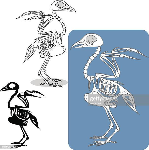 bird's skeleton - animal skeleton stock illustrations, clip art, cartoons, & icons