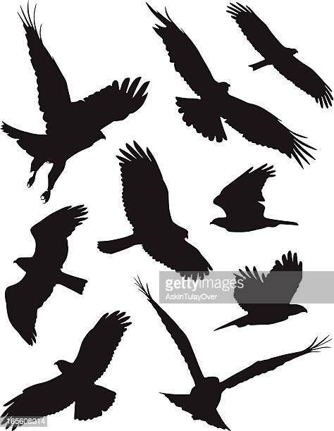 birds - hawk bird stock illustrations, clip art, cartoons, & icons