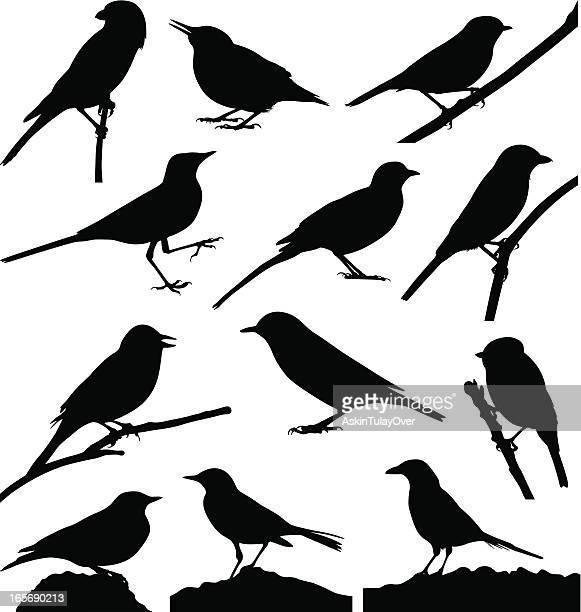 birds - magpie stock illustrations