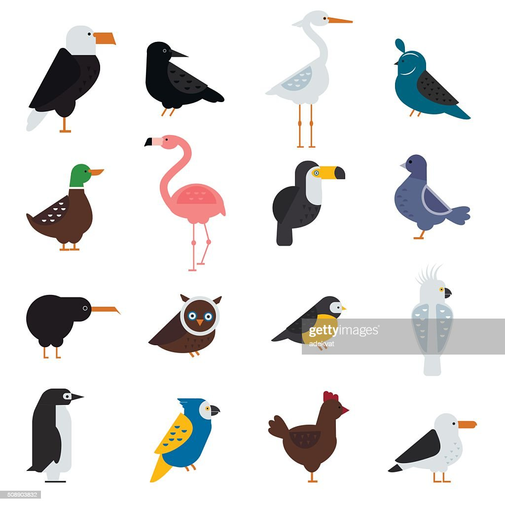 Birds vector set illustration. Eagle, parrot. Pigeon and toucan. Penguins