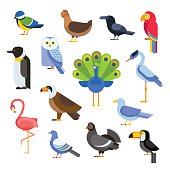 Birds vector set illustration. Egle, parrot, pigeon and toucan. Penguins