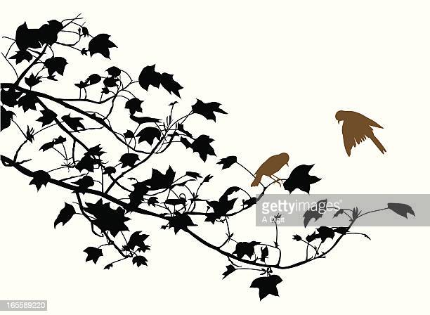 birds vector silhouette - branch plant part stock illustrations, clip art, cartoons, & icons