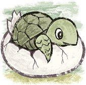 Birth of turtle