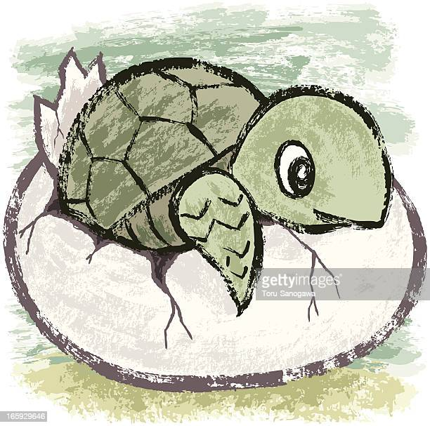 birth of turtle - green turtle stock illustrations, clip art, cartoons, & icons