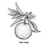 Bitter orange fruit.