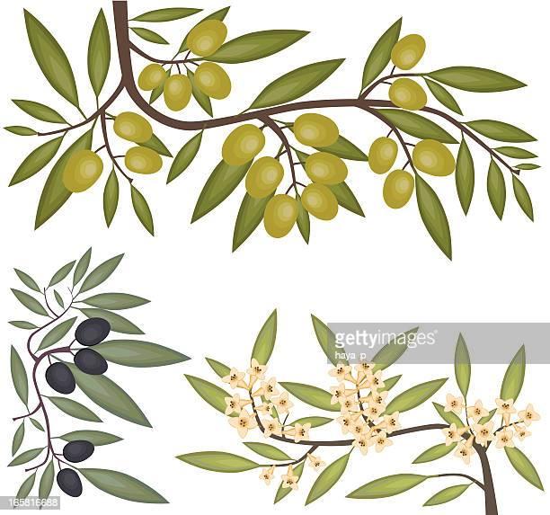 ブラック、グリーンオリーブ、開花枝 - オリーブの木点のイラスト素材/クリップアート素材/マンガ素材/アイコン素材