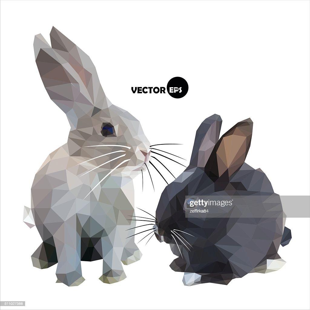Black and grey rabbit on white background