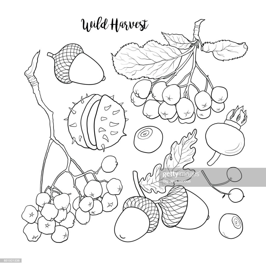 Black and white autumn, fall fruits and berries