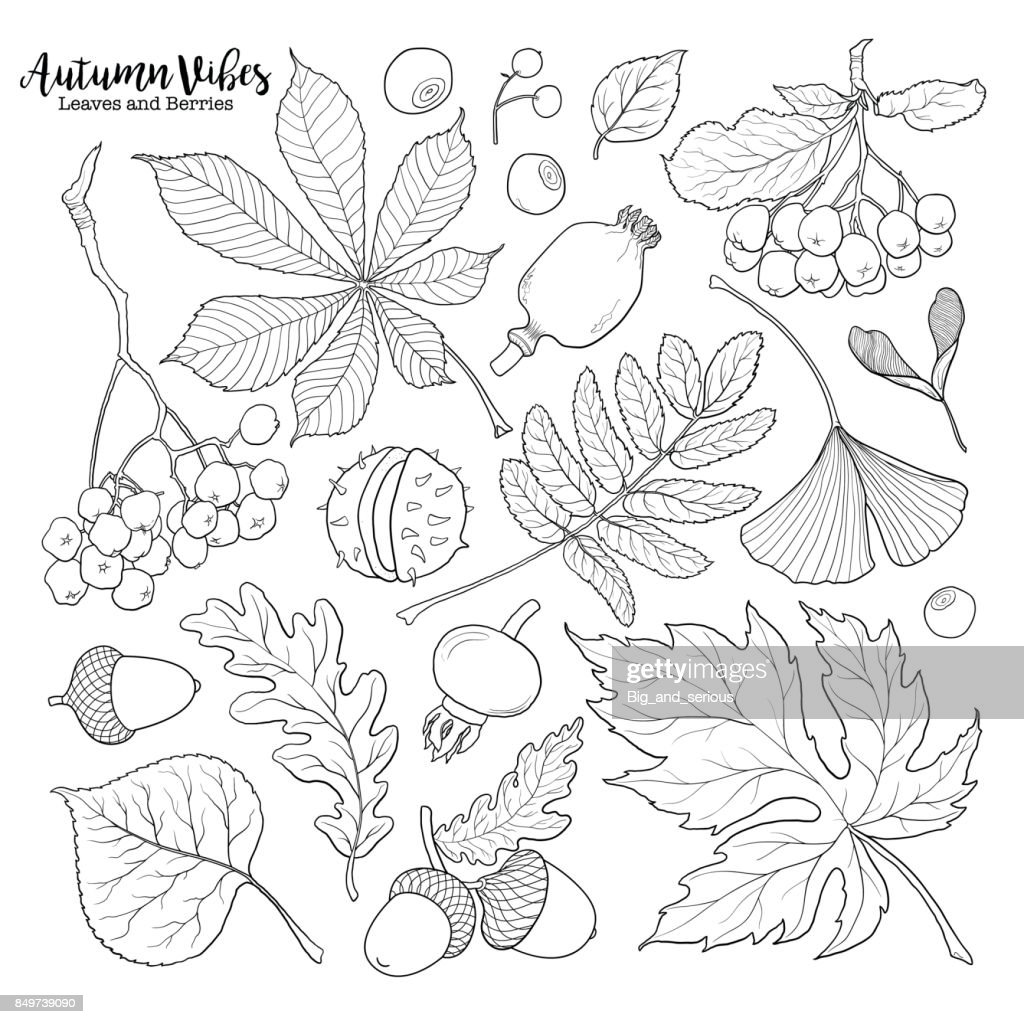 Black and white autumn falling leaves and berries