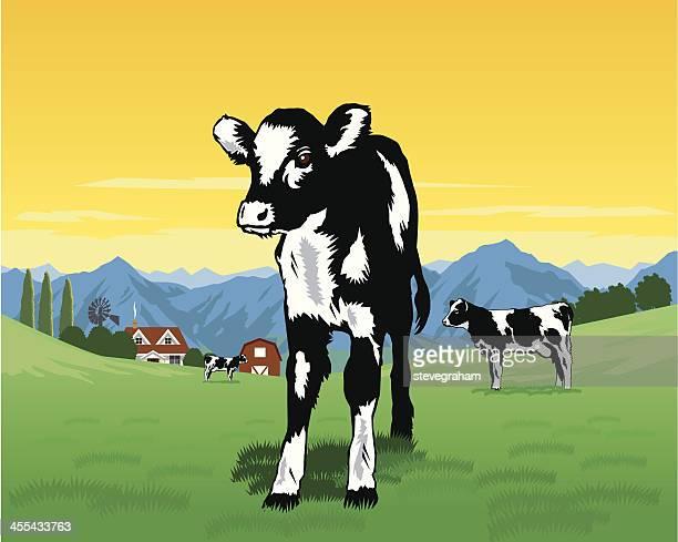 black and white calf - calf stock illustrations, clip art, cartoons, & icons