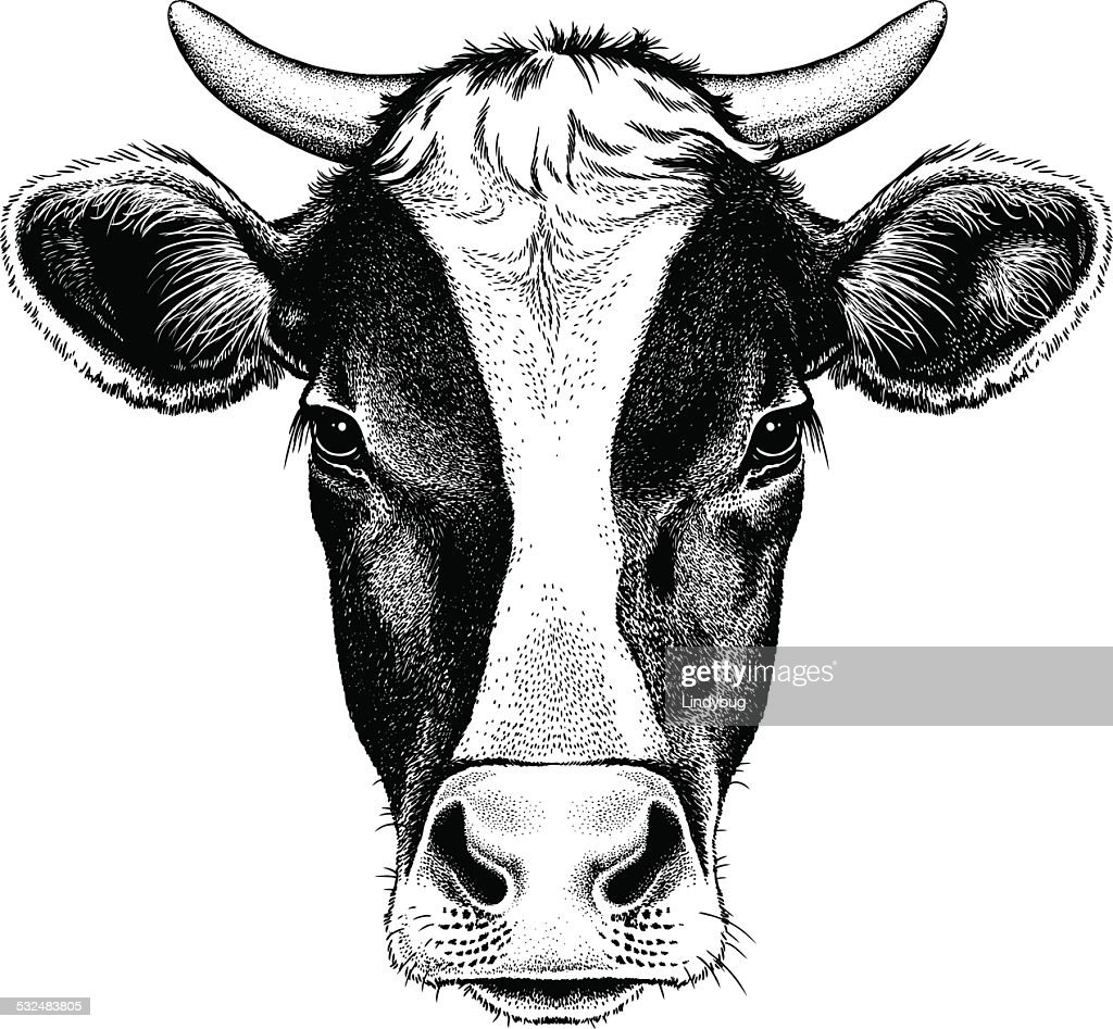Black and white cow with horns