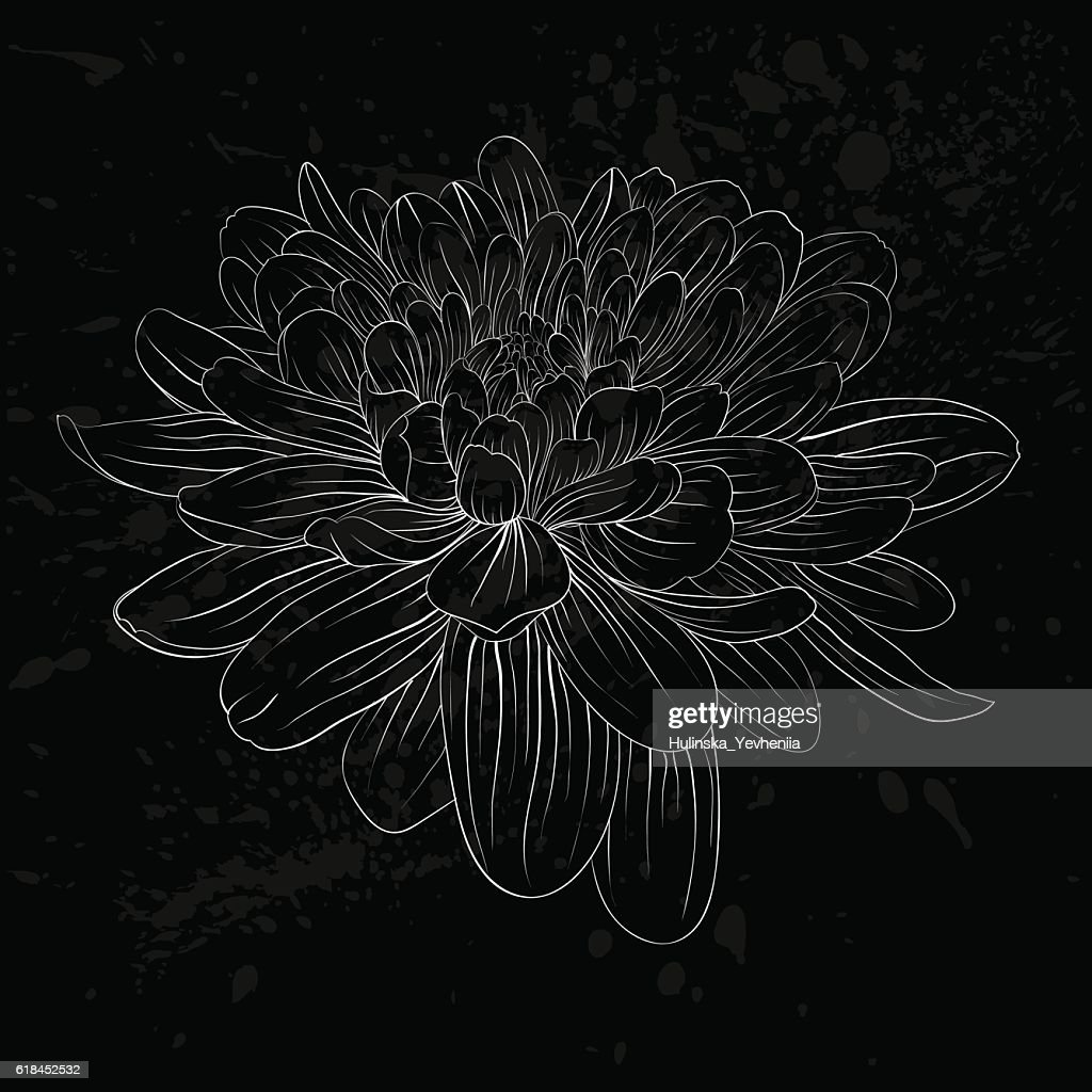 Black and white dahlia flower isolated vector art getty images black and white dahlia flower isolated vector art izmirmasajfo