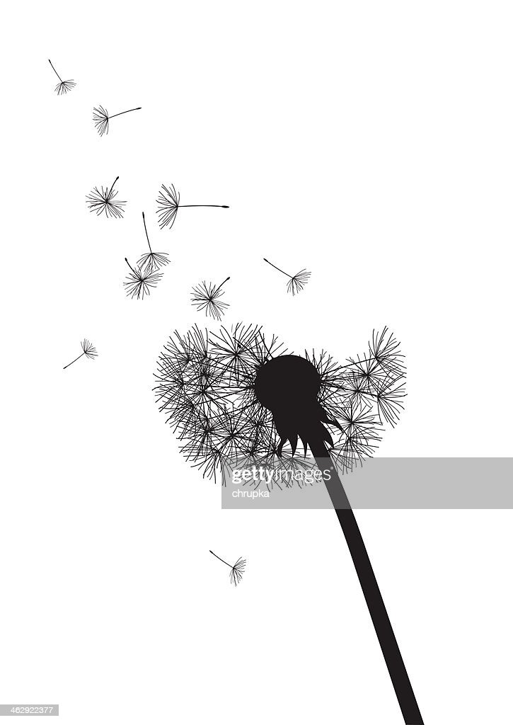black and white dandelion with flying seeds