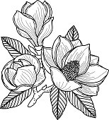 Black and white drawing of a branch of magnolia with flowers, buds and leaves.