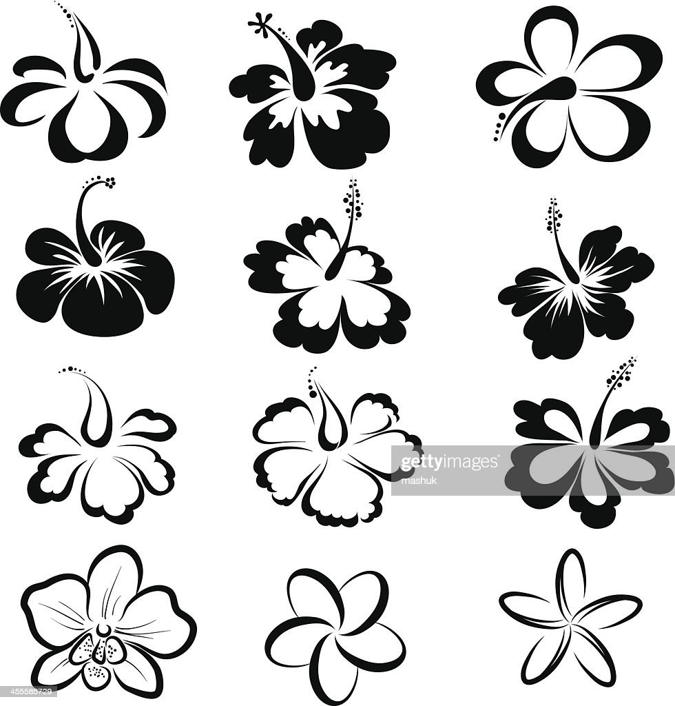 Black And White Drawings Of Tropical Flowers Vector Art Getty Images