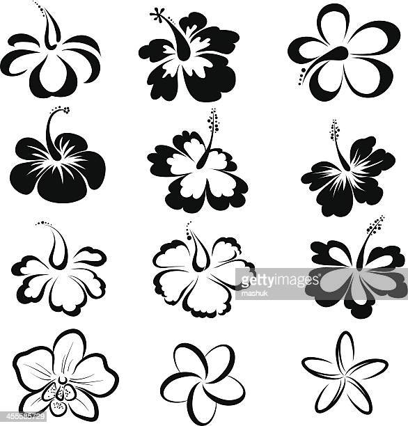 black and white drawings of tropical flowers - pacific ocean stock illustrations, clip art, cartoons, & icons