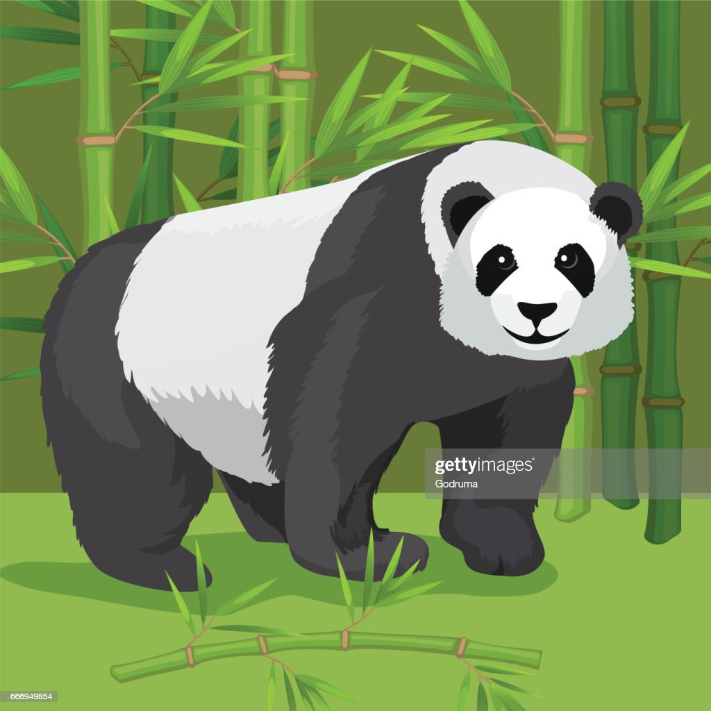 Black and white heavy panda stands on paws, bamboo background.