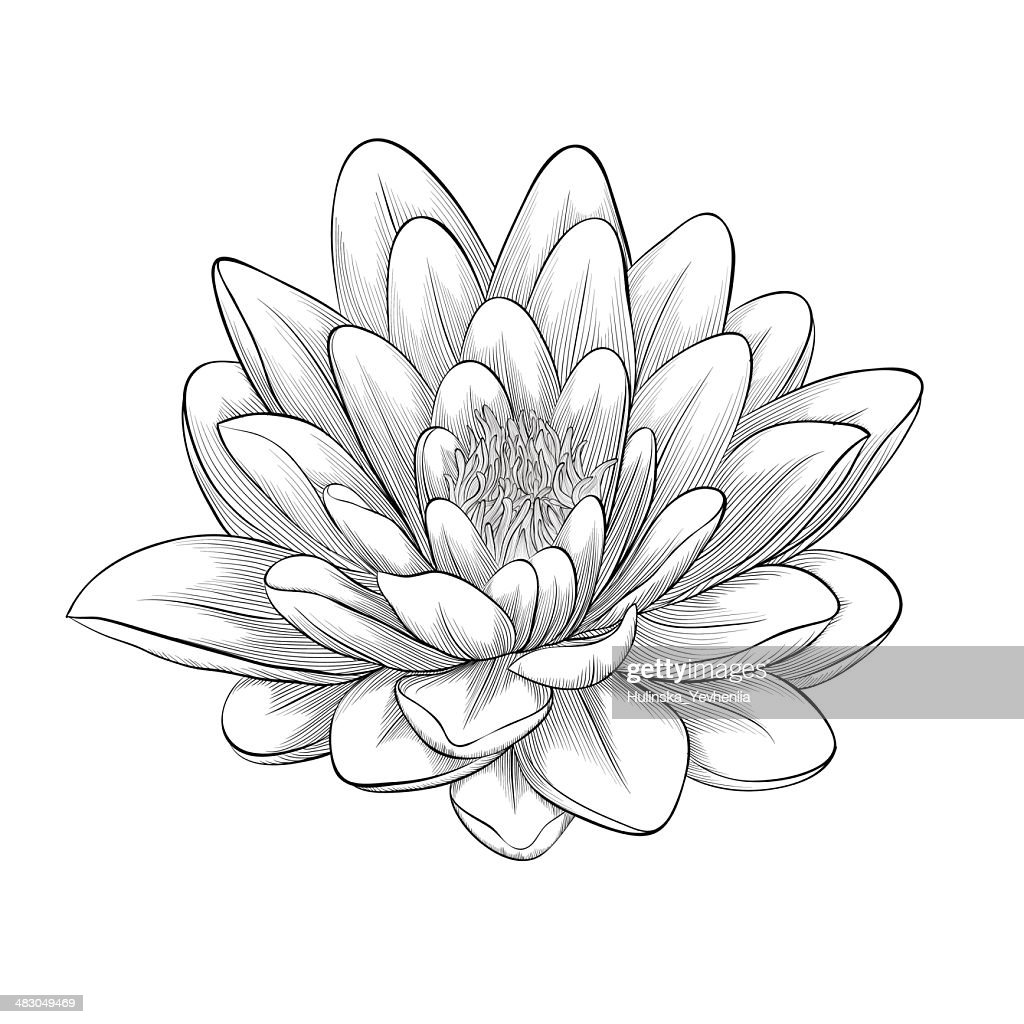 Black and white lotus flower painted in graphic style isolated black and white lotus flower painted in graphic style isolated vector art izmirmasajfo