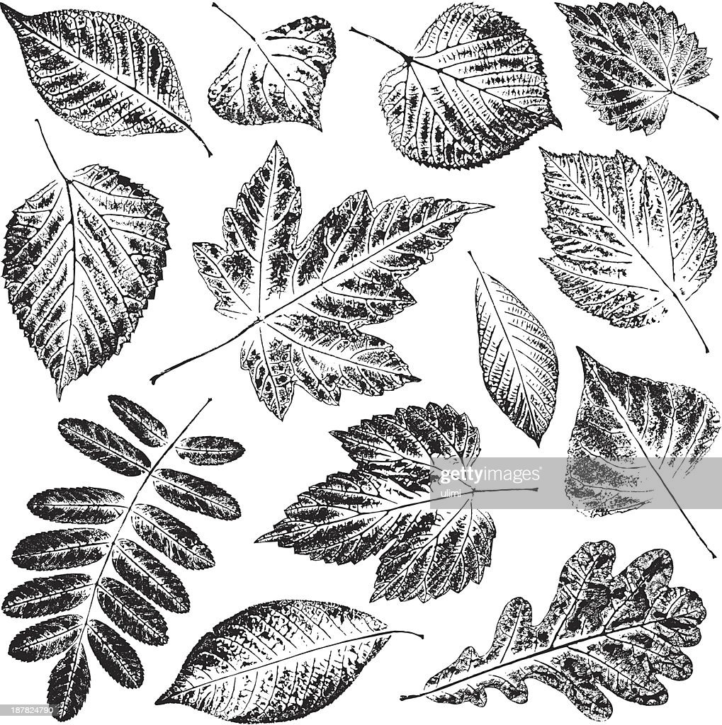 Black and white pictures of leaves in white background