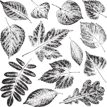 Black and white pictures of leaves in white background - gettyimageskorea