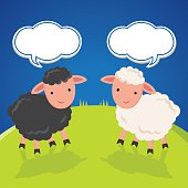 Black and white sheep.