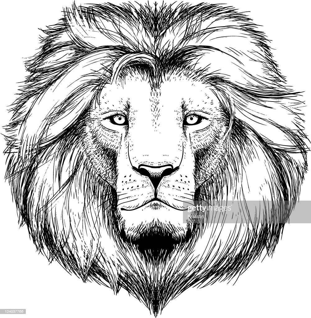 A black and white sketch of a lion's head