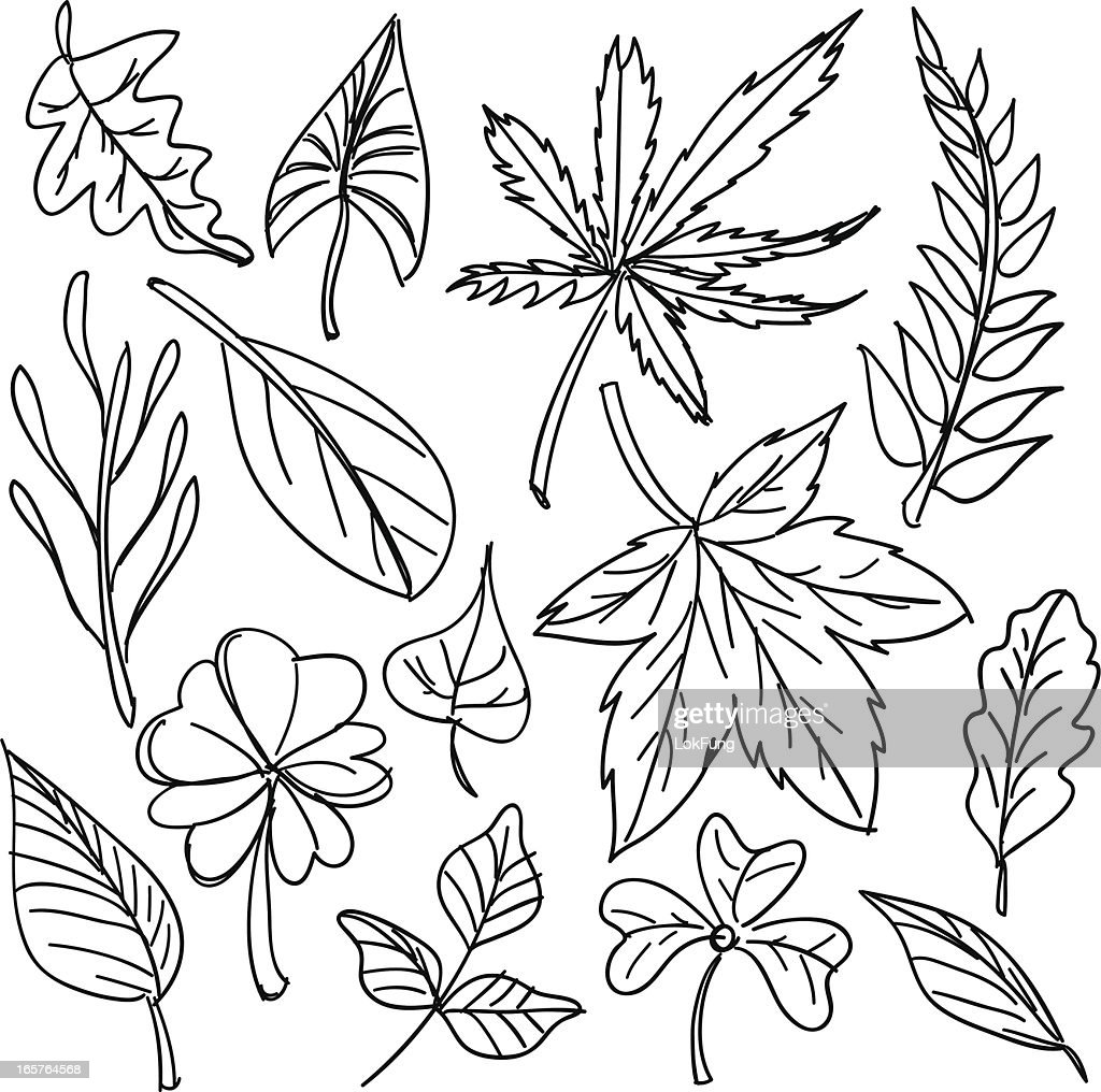 Black and white sketches of leaves