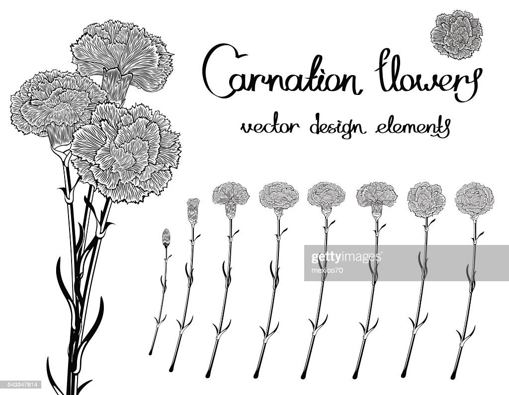 Black and white vector flowers set