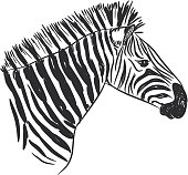 Black and White Zebra portrait, Head sketch isolated on white background. Vector