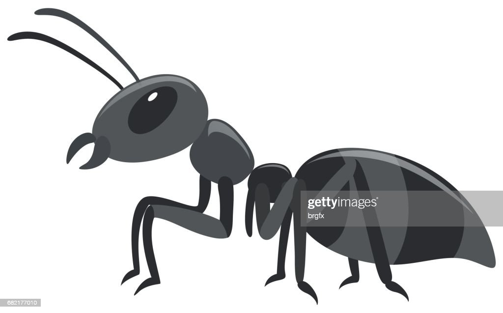 Black ant on white background
