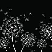 Black background with stylized white dandelions