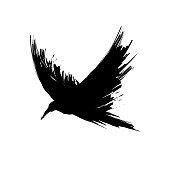 Black brush raven