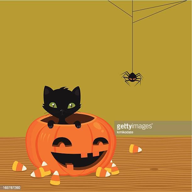 black cat and pumpkin - halloween cats stock illustrations