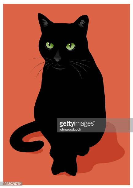 illustrations, cliparts, dessins animés et icônes de illustration de vecteur de chat noir - chat noir