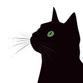 Black cat with green eyes on white background