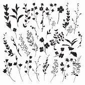 Black Drawn Herbs, Plants and Flowers. Vector Illustration
