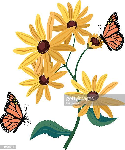 Black Eyed Susan Stock Illustrations And Cartoons Getty Images