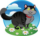 Black fat cat on the color background