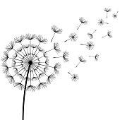 Black fluff dandelion on white background