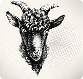 Black goat hand drawn. Vector illustration