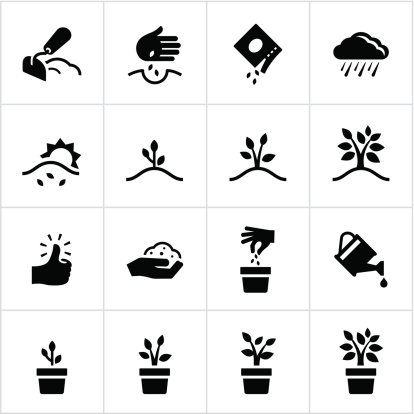 Black Growing Process Icons - gettyimageskorea