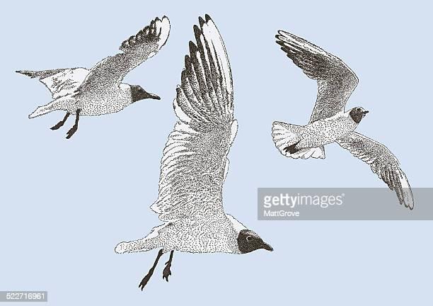 black headed gull - webbed foot stock illustrations, clip art, cartoons, & icons