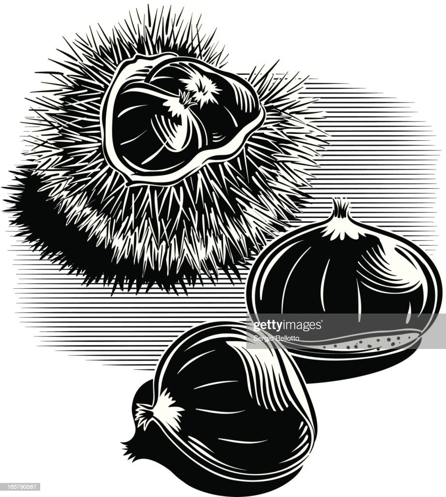 Black ink art of a variety of chestnuts