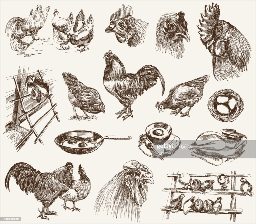 Black ink sketches of chicken breeding concepts