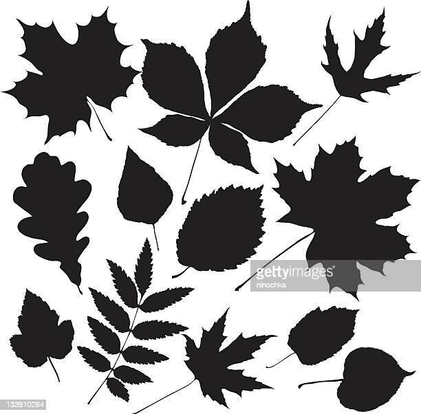 black leaves - ash stock illustrations, clip art, cartoons, & icons