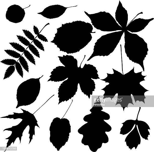 ブラックの葉 - オークの葉点のイラスト素材/クリップアート素材/マンガ素材/アイコン素材
