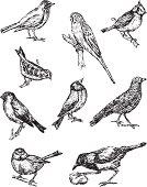 Black line illustration of nine birds