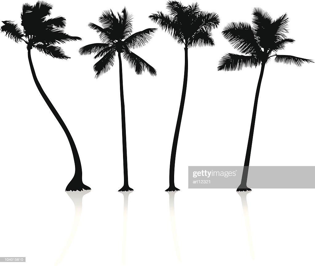 black palm trees on white background