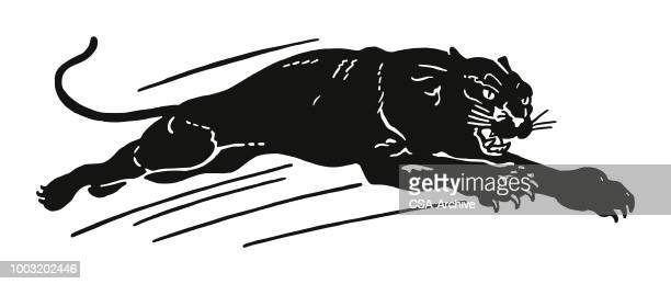 black panther - wildcat animal stock illustrations, clip art, cartoons, & icons
